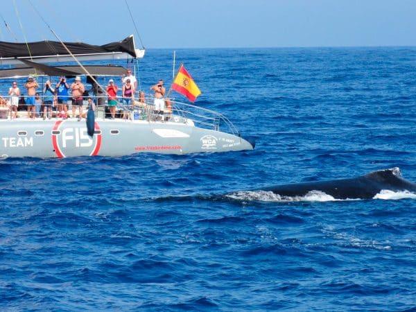 Freebird catamaran spot walvissen