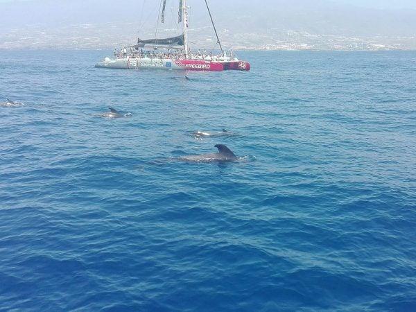 Freebird boot ziet walvissen voor de kust van Tenerife