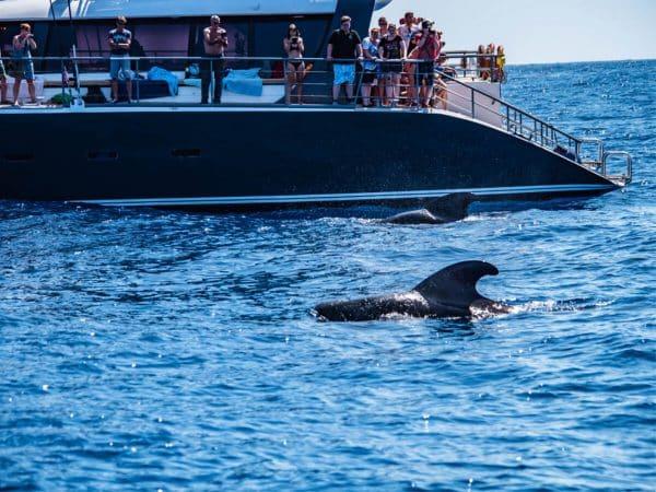 Walvis zwemt naast de Freebird