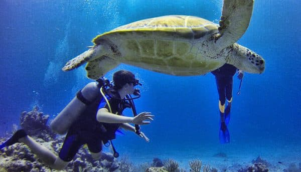 man is diving and sees a giant turtle