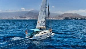 boat tour in Tenerife to spot wildlife
