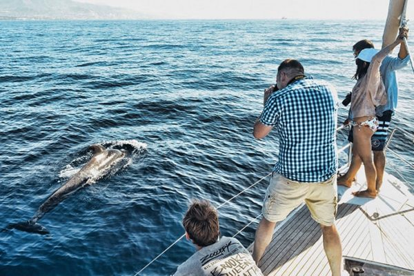 Group of people spot a pilot whale
