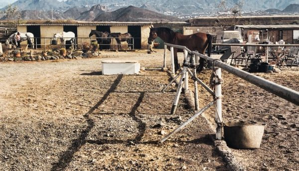 horse stable in Tenerife