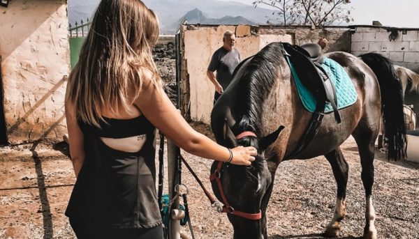 girl petting a horse