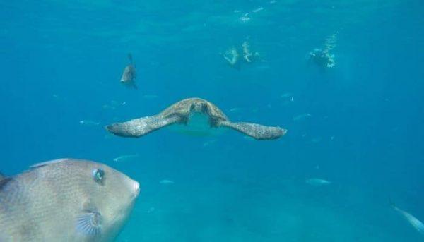 De schildpad werd gespot tijdens het snorkelen
