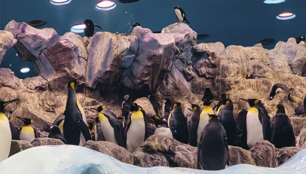 Pinguïns accommodatie in Loro Parque