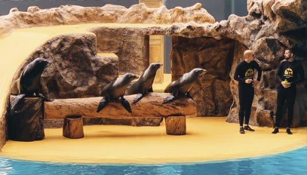 Zeeleeuwenshow in Loro Parque