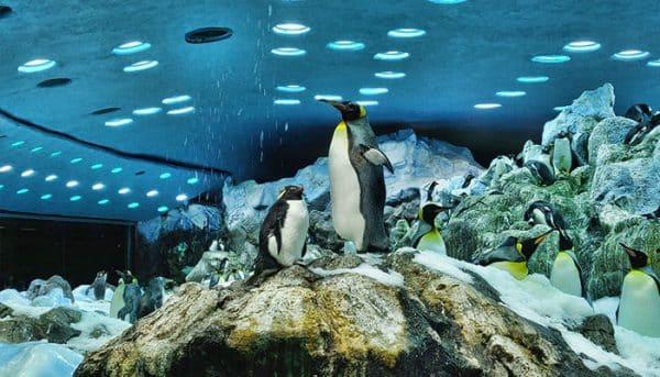 Penguins in Loro Park
