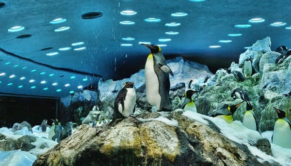 Pinguïns in Loro Park
