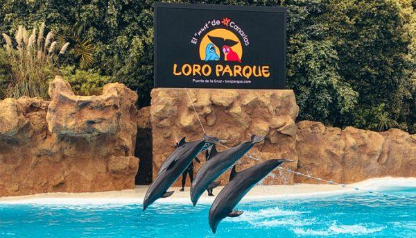 Dolphin show of Loro Parque