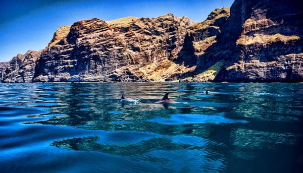 Whale watching near Los Gigantes