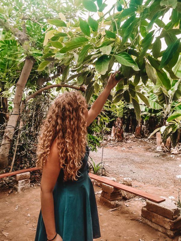 A customer of club canary enjoying a banana tour in tenerife
