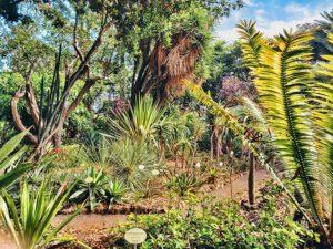 Jardin Botanico in Tenerife
