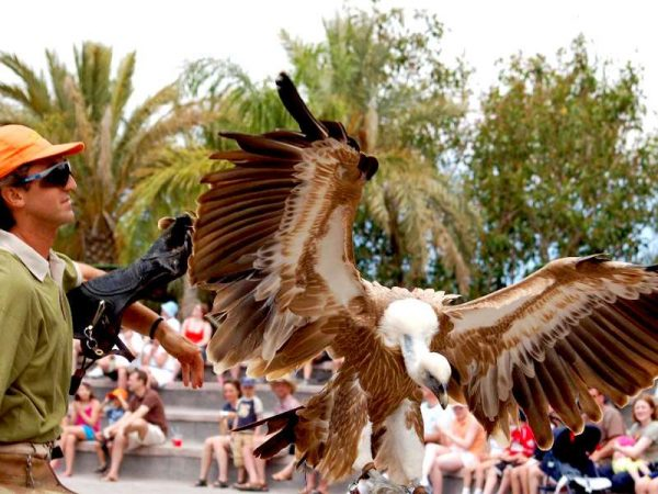 Vulture performs during the bird show at Jungle Park