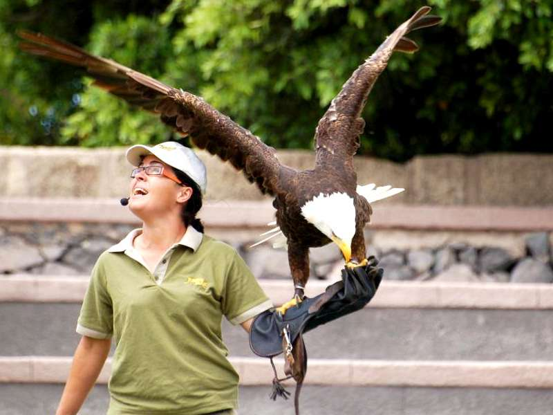 Birds of prey show in Jungle Park