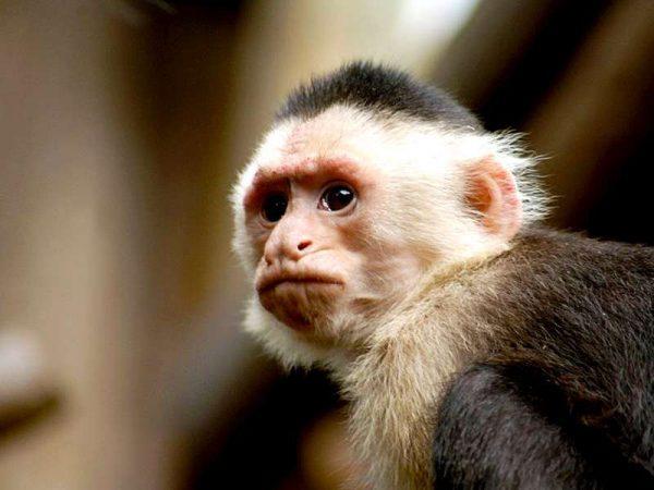 Monkey at Tenerife Zoo