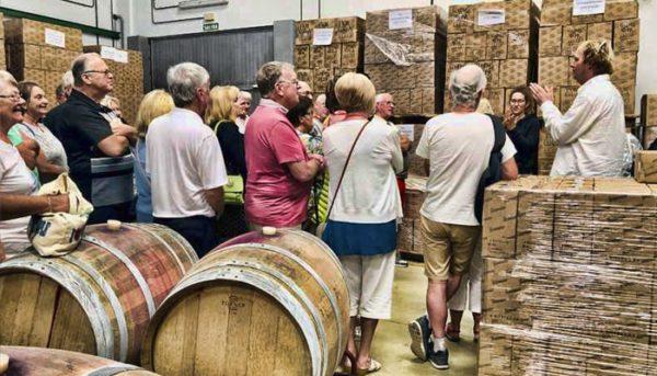 Tour of wine factory in Tenerife