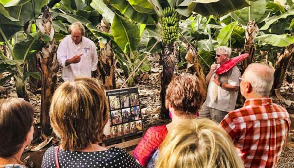 Information about wines on a banana plantation