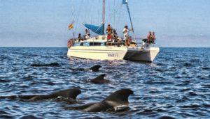 whale watching tour on the Bonadea II catamaran