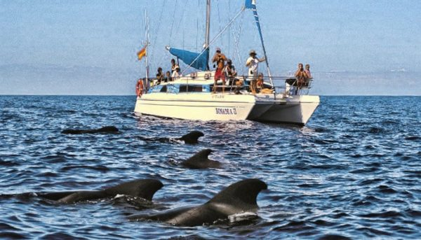 whale watching tour on the Bonadea II catamaran