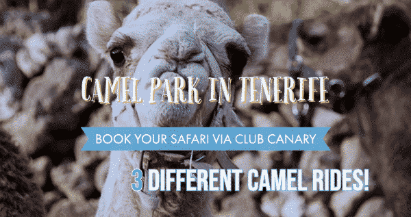 Club Canary is offering tickets for the camel park in the south of Tenerife