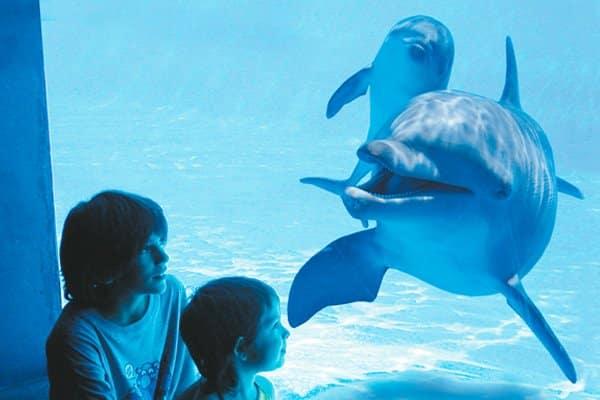 Dolfijnen achter het glas in Aqualand