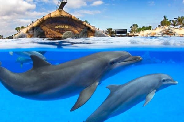 Zwemmende dolfijnen in Aqualand