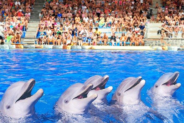 Dolfijnen treden op tijdens de dolfijnenshow in Aqualand