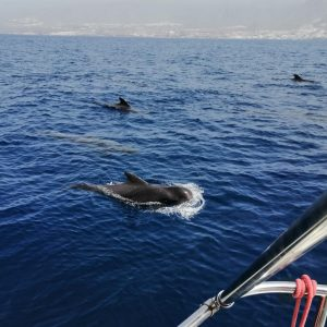 Spotting whales in Tenerife