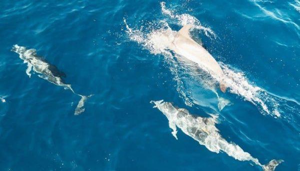 Groep dolfijnen gespot tijdens een boottocht