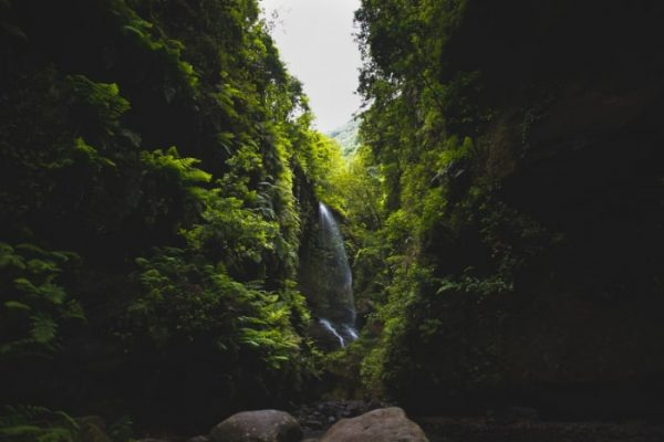 Waterfall in the forest of La Palma
