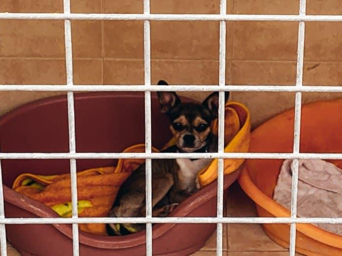 k9 honden Tenerife