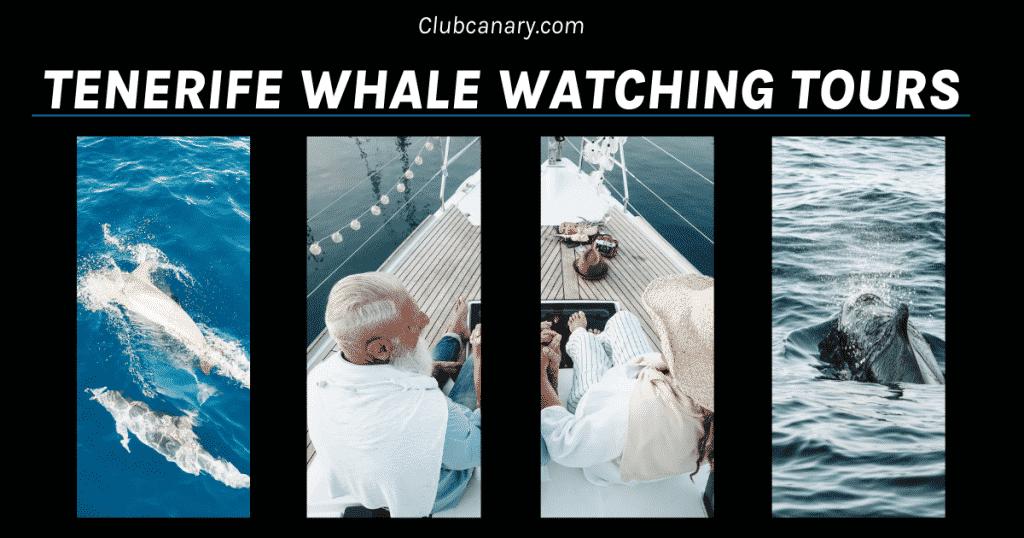 Walvissen en dolfijnen kijken