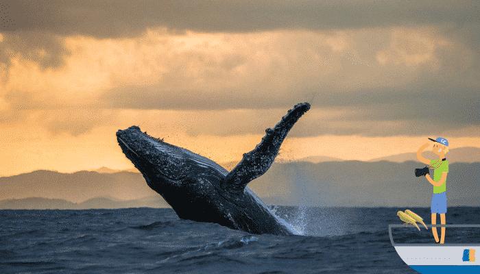 walvissen kijken op Tenerife