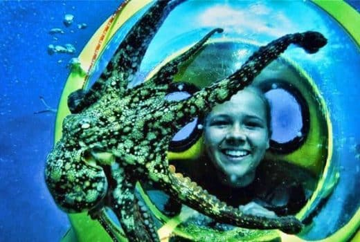 Girl Bob diving with an octopus on her glass